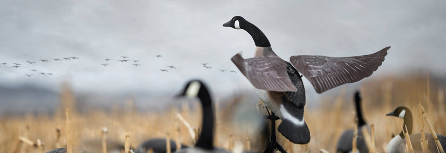 Bevegelige lokkefugler